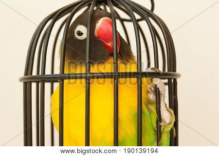 Animal Protection. Bird In A Cage. The Tightness