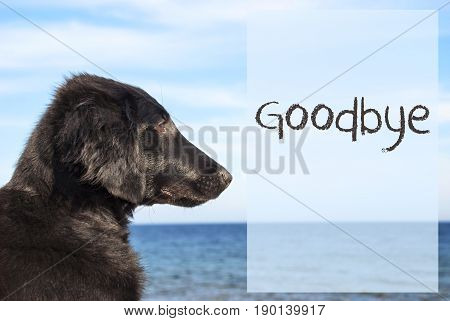 English Text Goodbye. Flat Coated Retriever Dog Infront Of Ocean. Water In The Background