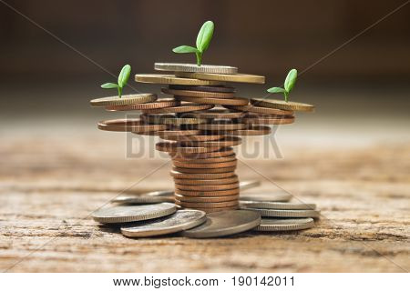 stack of coins with small green plant,concept idea for business or money saving and growth, stack coin of tree shape create.