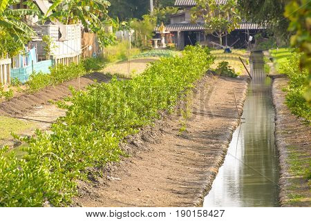 Small ditches used in agriculture family size