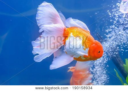 Goldfish In The Cabinet