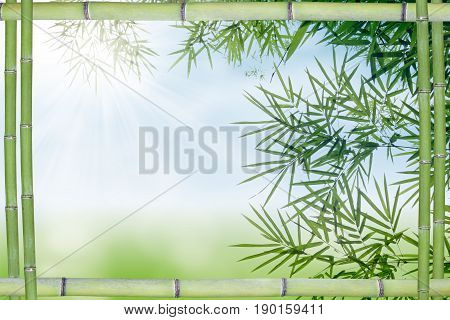 Bamboo leaf and frame background with blank place for text