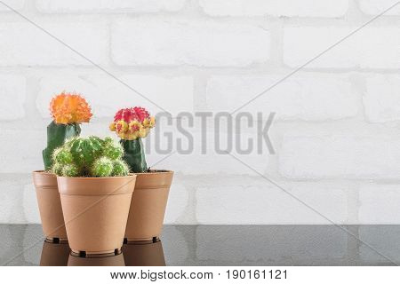 Closeup group of fresh green cactus in brown plastic pot for decorate on black glass table and white brick wall textured background with copy space