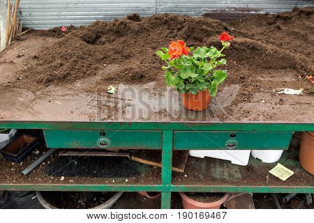 Preparation of plants or flowers for transplantation, in horticulture, in house greenhouses