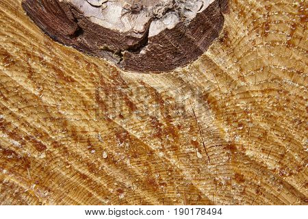 Timber cutting textured detail with resin drops. Wood background. Horizontal