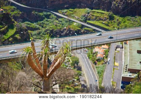 Palm Growing Over The Motorway On Madeira Island