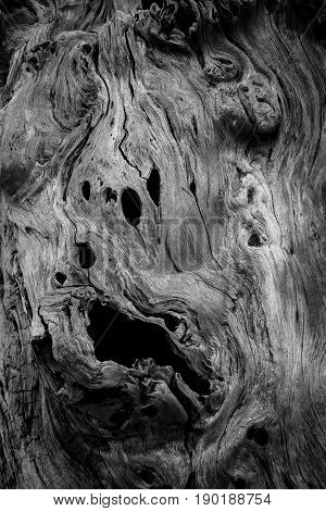 spooky of textures and patterns on the wood