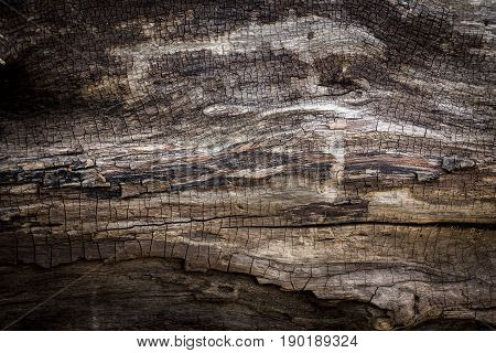 beautiful textures and patterns on the wood