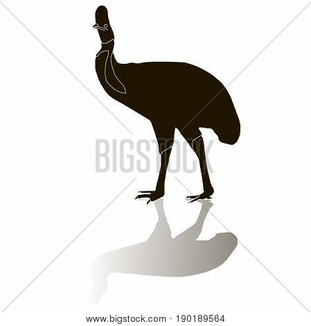 Black cassowaries silhouette on white with shadow, stock vector illustration