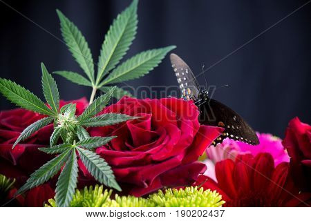 Macro detail of cannabis bouquet with red roses, green marijuana leaves and yellowtail butterfly with open wings