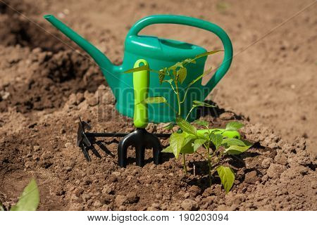 Spring Planting Peppers. Garden Tools With Plants Papper In Ground In Garden Outdoor.