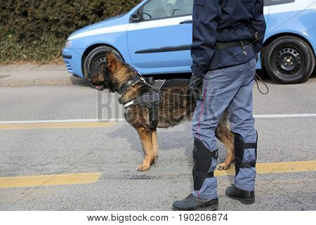 Dog Canine Unit Of The Police To Identify The Explosives During