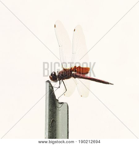 Image of a single dragonfly perching on metal rod