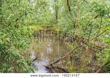 Willow trees and bushes around a narrow creek in Dutch National Park De Biesbosch at Werkendam. The horizontal tree trunks in the background are chopped down by the beavers.