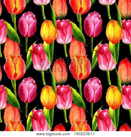 Wildflower tulip flower pattern in a watercolor style isolated. Aquarelle wild flower for background, texture, wrapper pattern, frame or border.