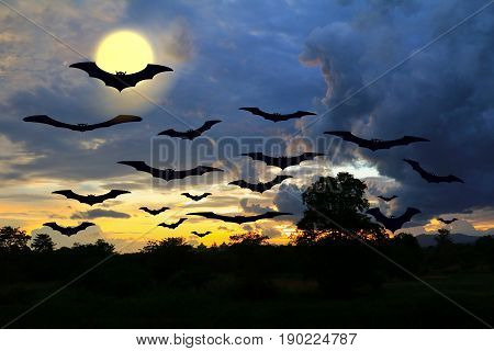 bat flying Vampire in day Halloween forest and sky with copy space for add text