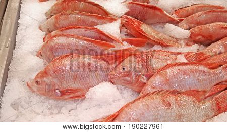 Group of Red Nile Tilapia on Ice for Sale