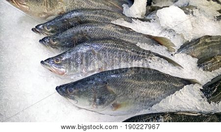 Group of Silver Perch or White Perch on Ice for Sale