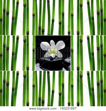 Still life with young bamboo sticks with stones, orchid