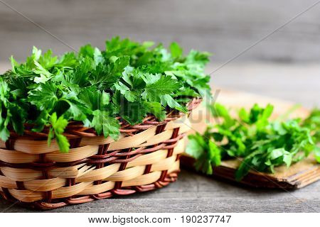 Parsley sprigs in a brown wicker basket and wooden board. Garden parsley herbs. Organic effective source of anti-oxidant nutrients, folic acid, vitamin K, vitamin C and vitamin A. Closeup