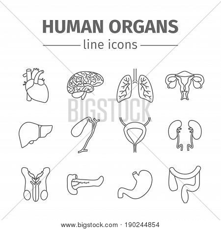 Human organs. Internal organs. Thin line icons set. Vector illustration