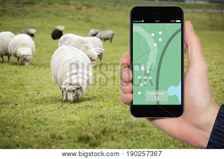 Internet of things in husbandry. Sheep tracking monitoring in smart farm.