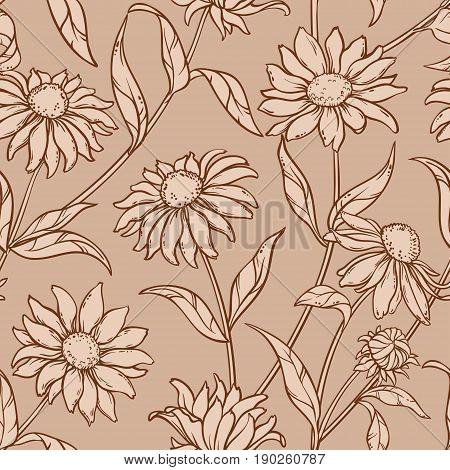 echinacea purpurea seamless pattern on color background