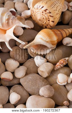 Sea pebbles and seashells background. Natural seashore stones textured surface, vertical