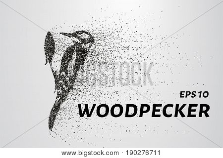 Woodpecker From Particles. Woodpecker Consists Of Circles And Points. Vector Illustration.