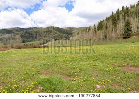 San Juan National Forest in Durango, CO