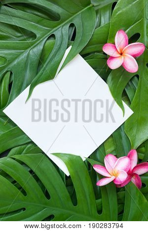 Tropic flat lay top view tropical summer botanical concept frame with palm leaves and plumeria on white