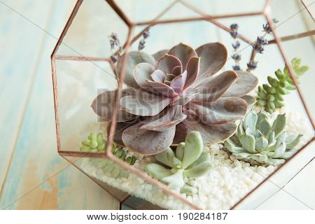 Glass flower pot, form of a dodecahedron with Echeveria and aloe