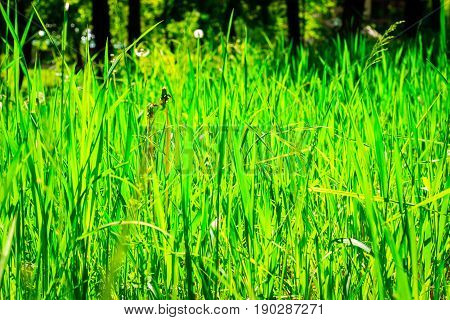 Background sun brightly lit green grass outdoors summer bright day very beautiful
