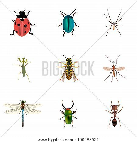 Realistic Insect, Ladybird, Emmet And Other Vector Elements. Set Of Insect Realistic Symbols Also Includes Emmet, Ladybird, Bug Objects.