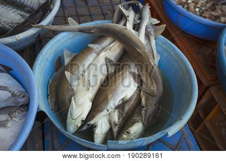 Sale Of Sharks In The Markets Of Different Cities Of Goa