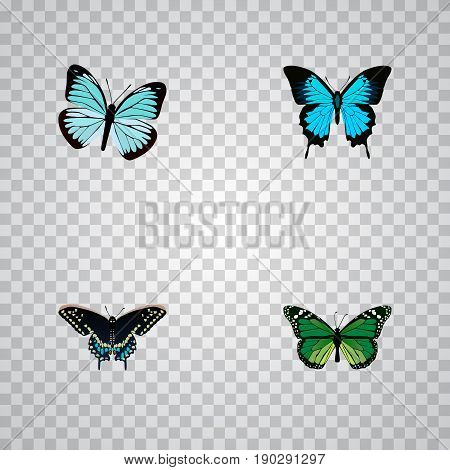 Realistic Birdwing, Morpho Hecuba, Papilio Ulysses And Other Vector Elements. Set Of Butterfly Realistic Symbols Also Includes Butterfly, Green, Bluewing Objects.