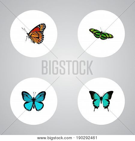 Realistic Green Peacock, Milkweed, Copper And Other Vector Elements. Set Of Butterfly Realistic Symbols Also Includes Monarch, Hairstreak, Bluewing Objects.