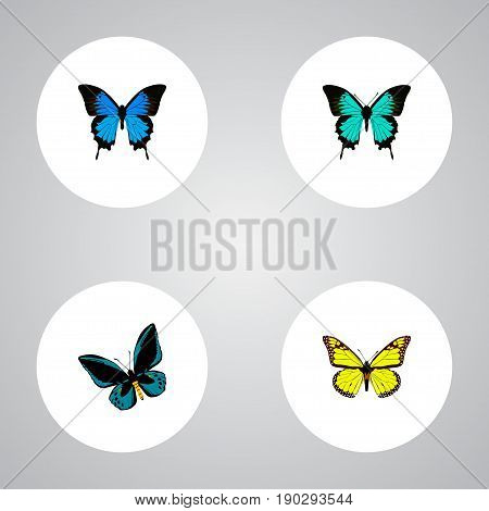 Realistic Archippus, Common Blue, Copper And Other Vector Elements. Set Of Moth Realistic Symbols Also Includes Bluewing, Sky, Fly Objects.