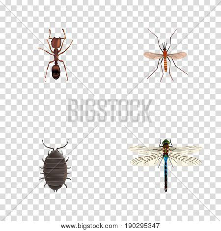 Realistic Gnat, Emmet, Dor And Other Vector Elements. Set Of Insect Realistic Symbols Also Includes Bug, Emmet, Alive Objects.