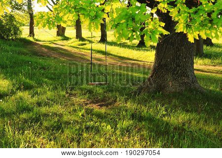 Sunny day of green nature outdoor swing on big tree. A swing on a tree in a village in the summer. Summer bright rays of the sun shine through the green tree with a swing.