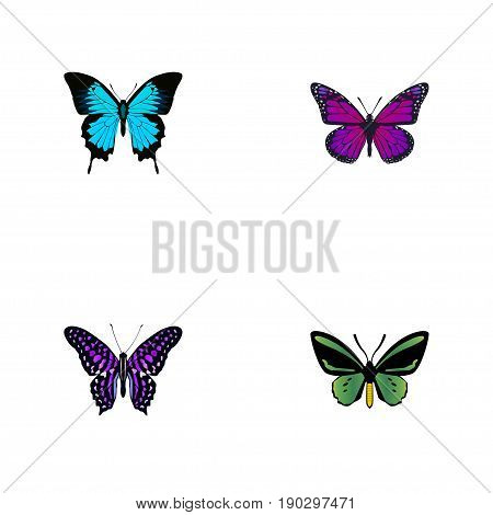 Realistic Papilio Ulysses, Polyommatus Icarus, Tropical Moth And Other Vector Elements. Set Of Beauty Realistic Symbols Also Includes Violet, Blue, Green Objects.