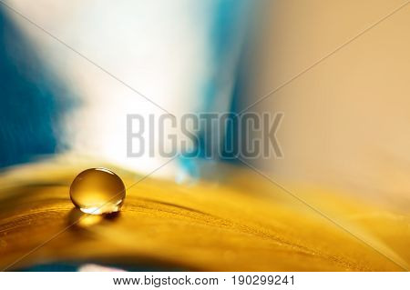 A drop of water on a golden feather with a blue background. A feather with a drop of water. Selective focus.