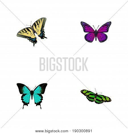 Realistic Checkerspot, Green Peacock, Purple Monarch And Other Vector Elements. Set Of Butterfly Realistic Symbols Also Includes Green, Violet, Bluewing Objects.