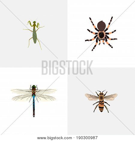 Realistic Grasshopper, Tarantula, Damselfly And Other Vector Elements. Set Of Insect Realistic Symbols Also Includes Beetle, Locust, Wasp Objects.
