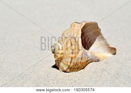 An Empty Shell Lying On The Sand In The Desert.