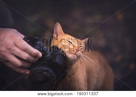 Docile kitten rubbing herself on the camera.