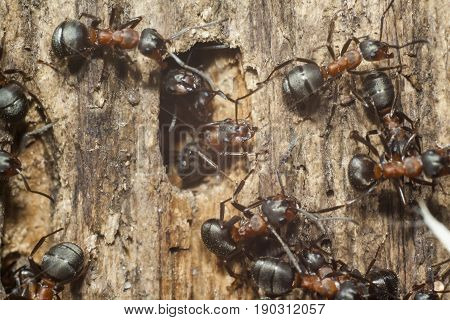 ants on wooden plank extreme closeup shot