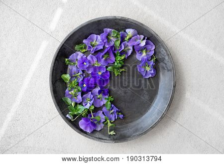 Blue pansies in a metal tray on gray concrete background.