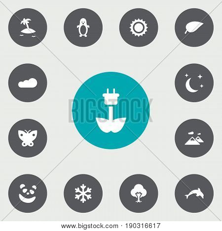 Set Of 13 Bio Icons Set.Collection Of Winter Snow, Isle Beach, Bear And Other Elements.