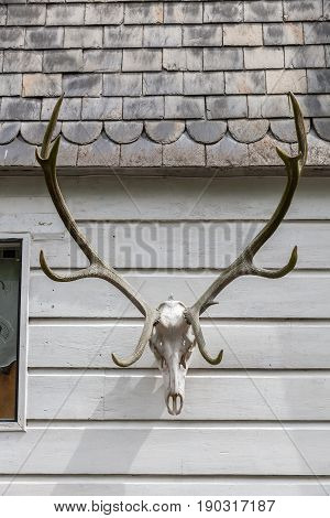 Deer Antlers At A House Wall In Monschau, Germany